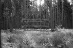 Větve, provaz,11x5m,Šumava